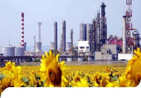 refinery-sunflowers