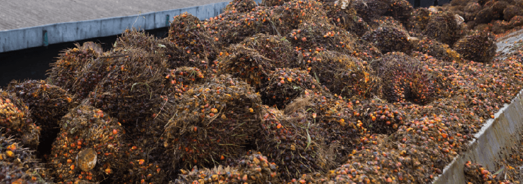 Milling palmoil page image