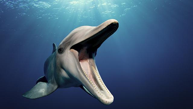 dolphin 640x360