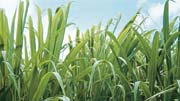 Bioethanol production_180x101.jpg