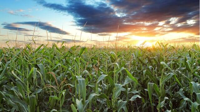 agriculture_640x360.jpg