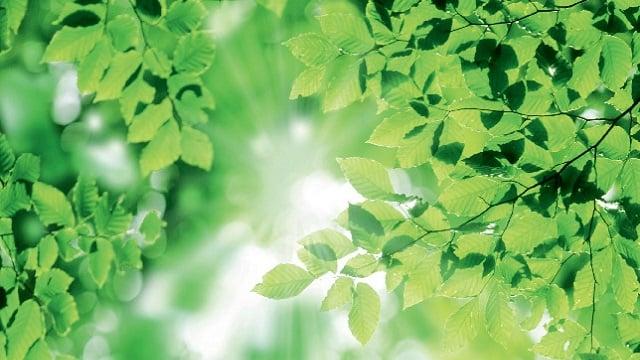 Alfa Laval sustainability