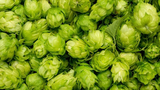Hops clear green 640x360