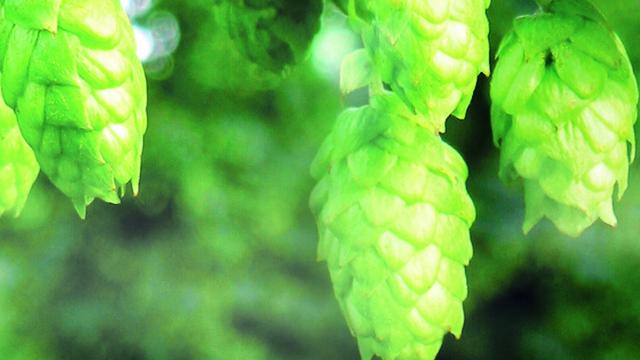 slavutich-brewery-case 640x360