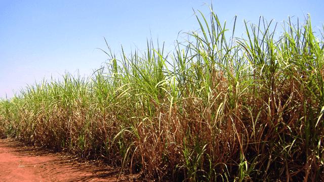 brazilian-sugar-ethanol-case 640x360