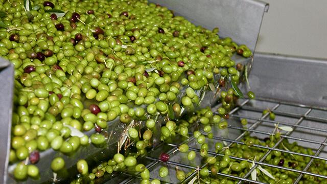 Olive crushers.jpg