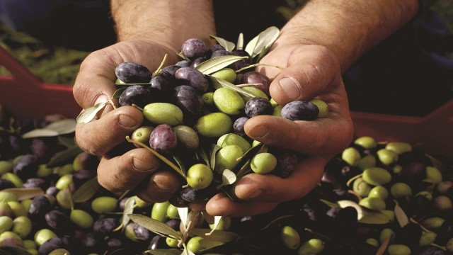 Olive fruit preparation