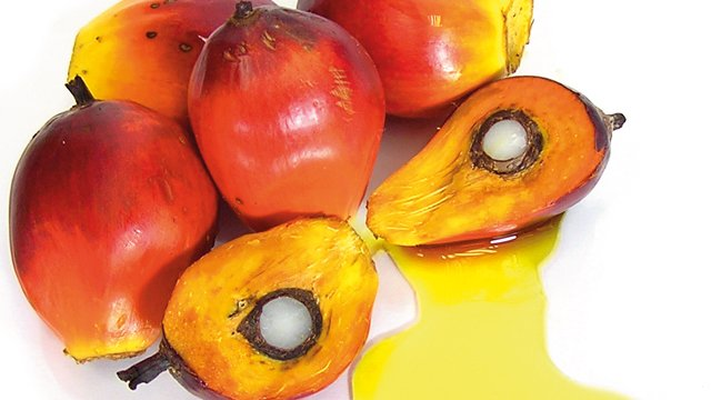 Palm oil processing_640x360.jpg