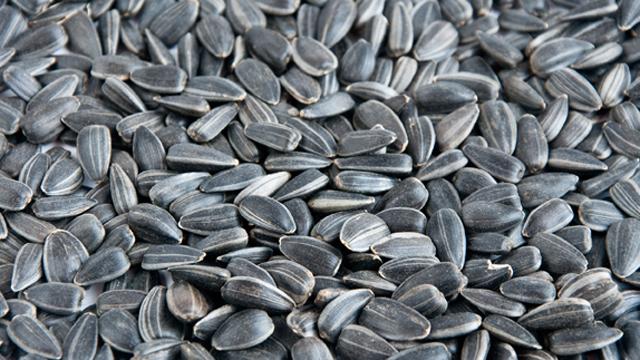 Seed oil processing_640x360.jpg