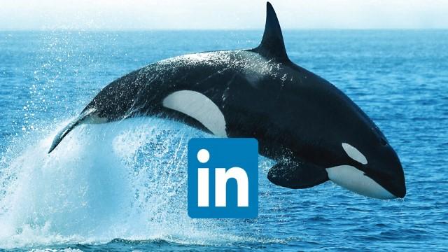 Acceso a la página de LinkedIn de Alfa Laval