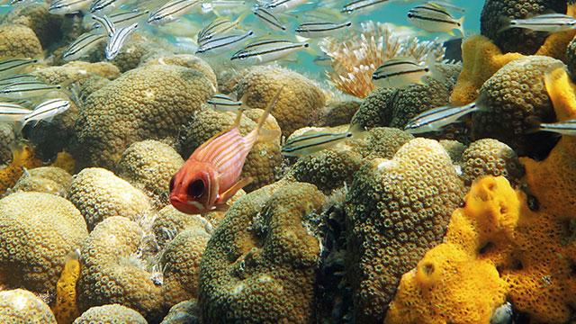 marine compliance fish640x360