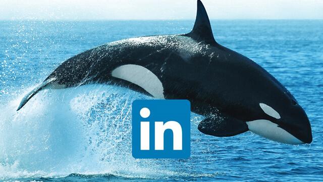 Marine LinkedIn 640x360