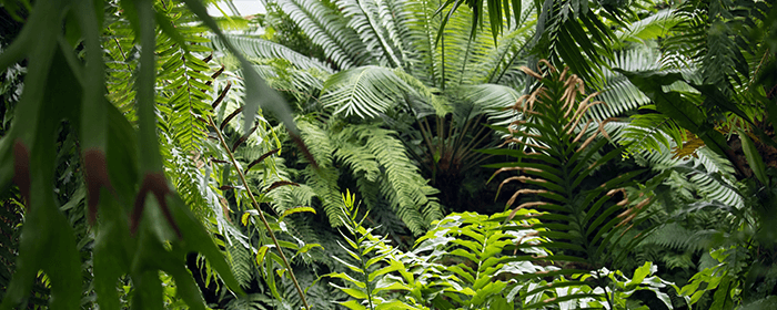 Rain forest CO2.png