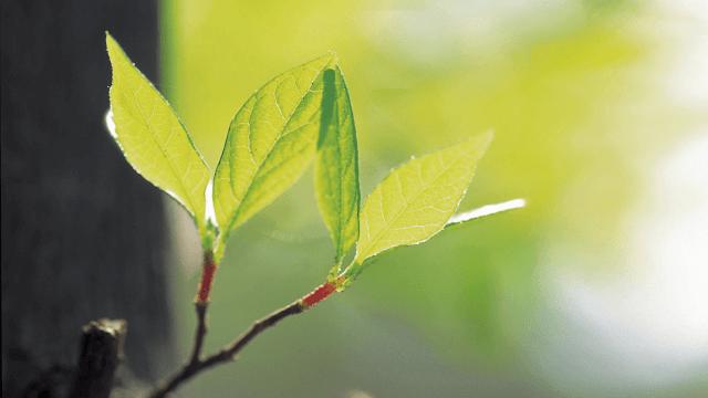 leaf_640x360.png