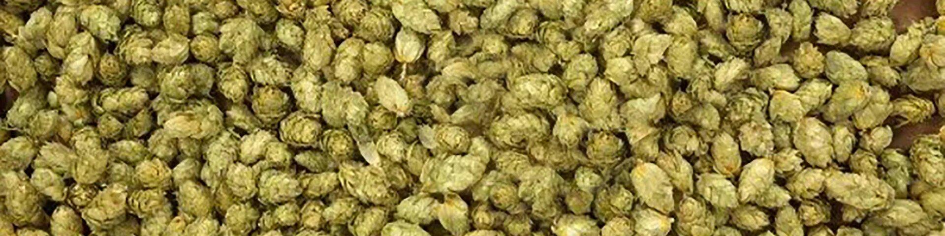hops3-1920-x-480