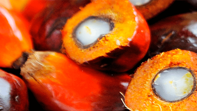 palm oil processing 640 x 360