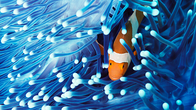 marine-fish-360x640