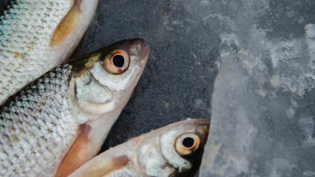 transformation co produits de la mer et fabrication de farine de poisson alfa laval