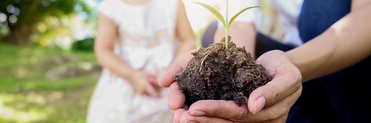 Sustainable optimization plant child adult hands