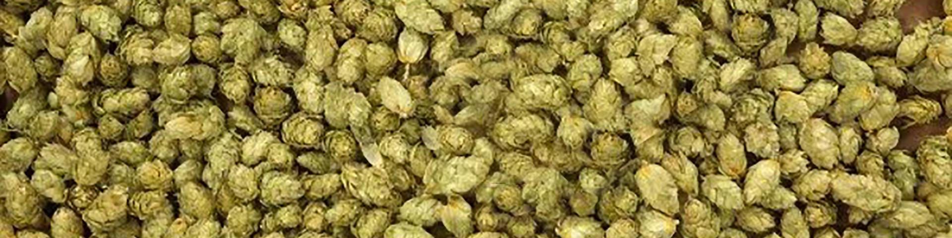 hops3 1920 x 480