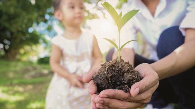 Sustainable optimization plant child adult hands 640x360
