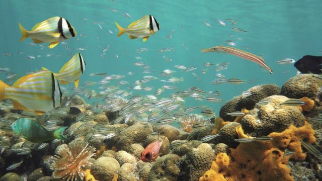 Ballast water treatment  underwater fish 640 360