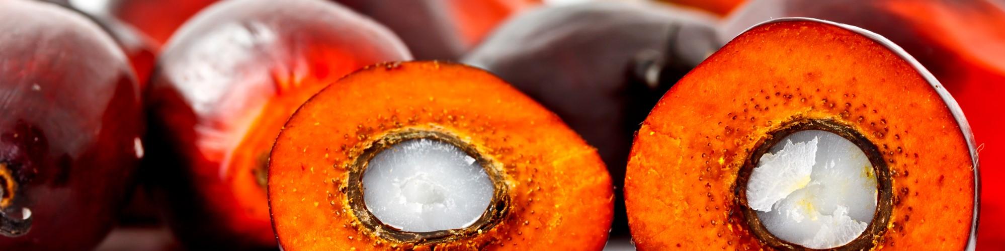 20190107 palm oil herobanner