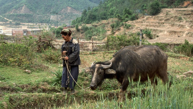 https://www.alfalaval.com/globalassets/images/media/here-magazine/no35/man_walking_with_cow_640x360.jpg