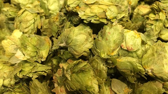 https://www.alfalaval.com/globalassets/images/media/stories/beverage-processing/hops_640x360.jpg