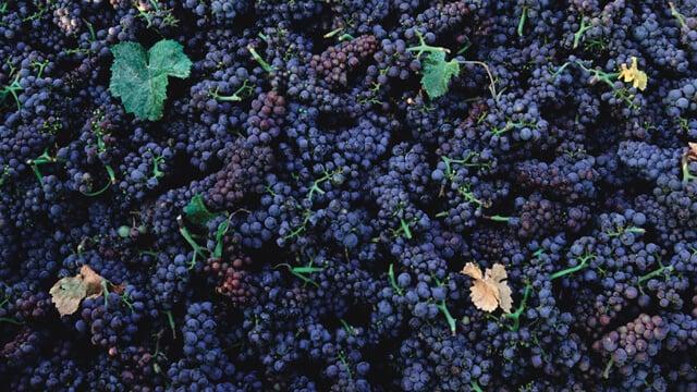 Rabastens winery case story 640x360