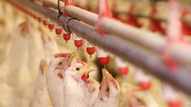 Animal nutrition 640x360