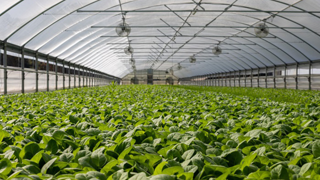 field of plants in greenhouse640x360