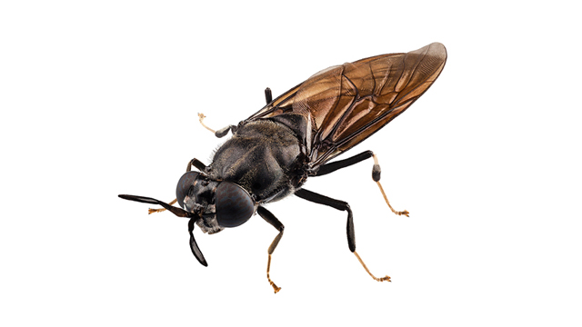 insect 640x360