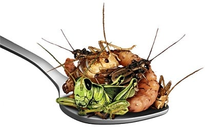 insects in a spoon 400x250.jpg