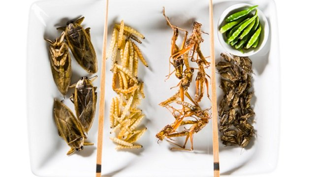 Insects on a plate 640x360.jpg