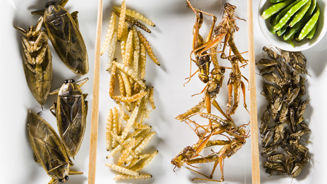 https://www.alfalaval.com/globalassets/images/media/stories/food-processing/insects_on_a_plate_640x360.jpg