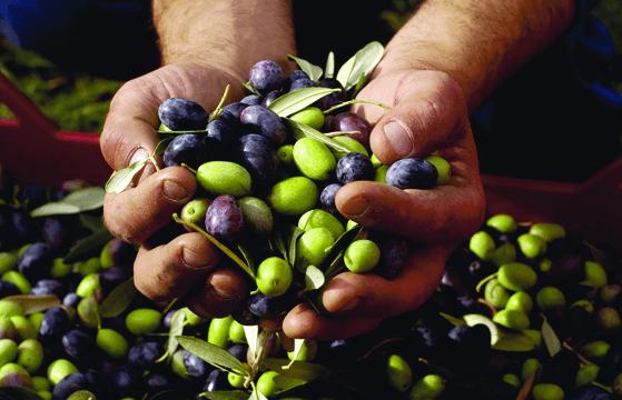 Oliven Hände 640 x 360.png