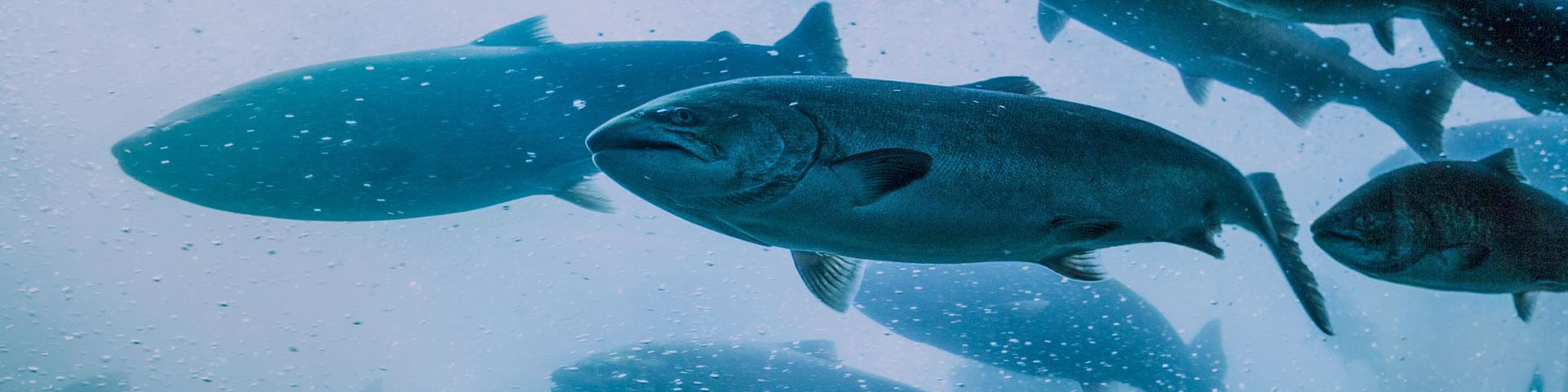nordfishing-hero-2-1920x480