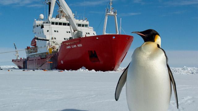 Pinguin 640x360