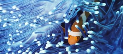 webinar_clownfish-membranen423x187.jpg