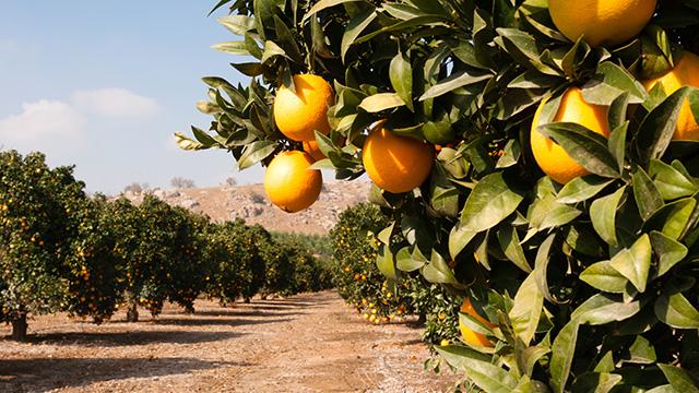 citrus_diverse_portfolio.jpg
