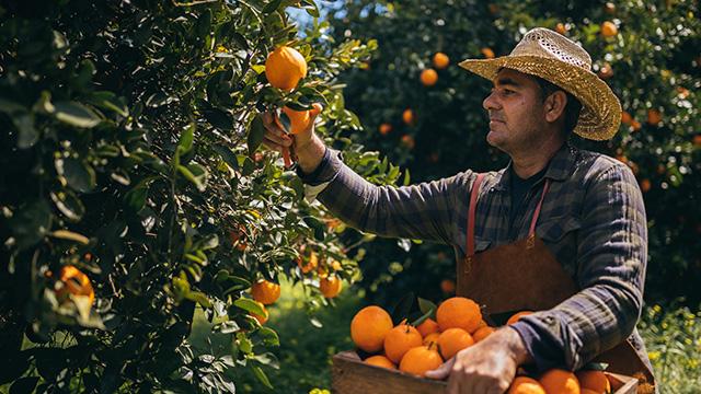 citrus other juice applications640x360