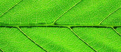leaf_webinar_423x184.png